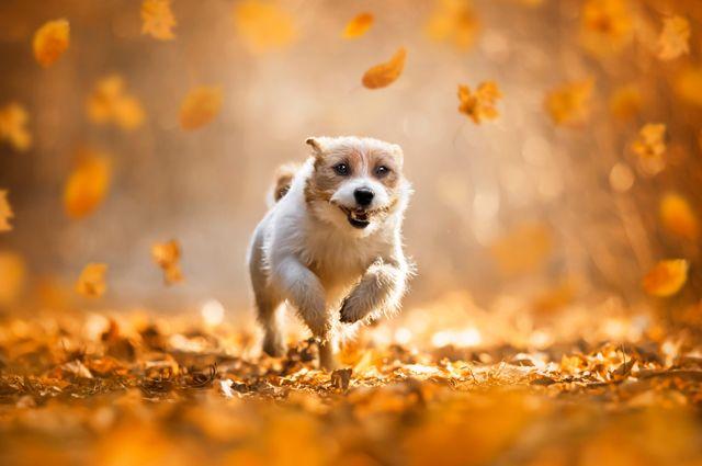po-sezonu-komitet-veterinarii-o-pravilah-zashhity-pitomca-osenju-1ece5cd